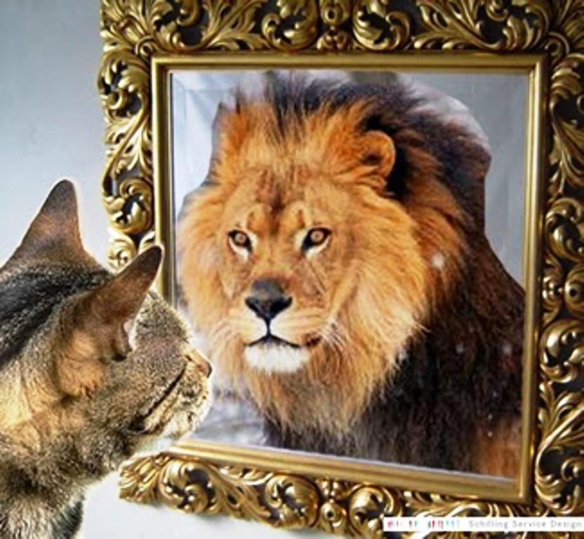 falsche selbstwahrnehmung psychologie